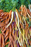 Assortment of Carrots arranged for sale Stock Photography