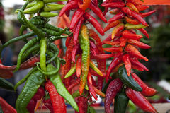 Assortment of chili peppers on a string. Assortment of green and red chili peppers on a string at the market Royalty Free Stock Photo