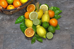 Assortment with citrus fruits Stock Photography