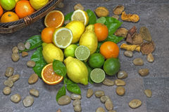 Assortment with citrus fruits Royalty Free Stock Image