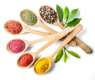 Assortment of colorful spices Stock Image