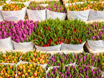 Assortment of colorful tulips in a flower shop Royalty Free Stock Image