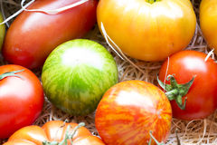 Assortment of different cultivars of fresh tomatoes Royalty Free Stock Image
