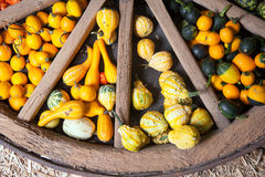 Assortment of different decorated pumpkins. In a large wooden wheel Royalty Free Stock Photography