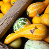 Assortment of different decorated pumpkins Royalty Free Stock Photo