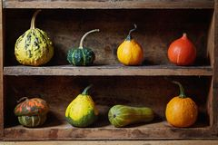 Assortment of different decorative and edible pumpkins stock image