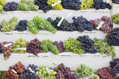Assortment of different grapes Stock Photography