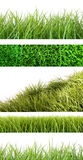 Assortment of different grass on white Royalty Free Stock Photos