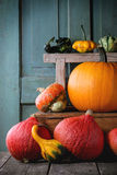 Assortment of different pumpkins Stock Images