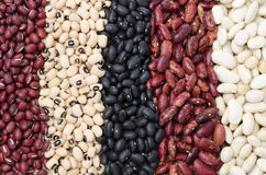 Assortment of different types of beans horizontal Royalty Free Stock Photography