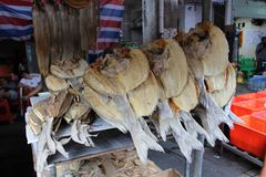 Dried fish in the Asian market Royalty Free Stock Images