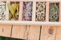 Assortment of dry medicinal herbs Royalty Free Stock Image
