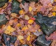 Autumn Leaves And Rock Royalty Free Stock Photos