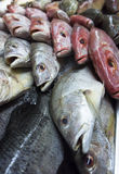 Assortment of fishes Stock Photo