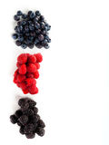 Assortment of forest fruits, rasperries, blueberries and blackbe. Rries Royalty Free Stock Photo