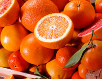Assortment of fresh citrus Royalty Free Stock Photography