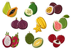 Assortment of fresh harvested tropical fruits Stock Image