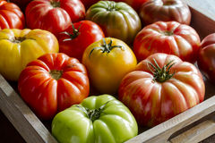 Assortment of Fresh Heirloom Tomatoes Royalty Free Stock Photography