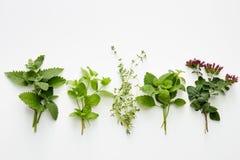 Assortment of fresh herbs catnip, mint, thym, lemon balm and or royalty free stock photo