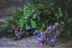Assortment of fresh herbs Royalty Free Stock Photography