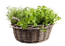 Assortment of fresh herbs in wicker basket Stock Images