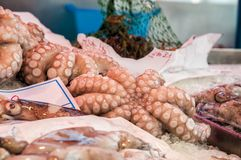 Assortment of fresh octopus. Seafood. Fish Market in Venice royalty free stock images
