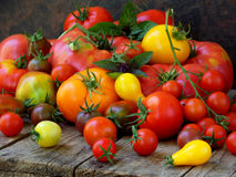 Assortment of fresh organic colorful tomatoes on wooden background. Royalty Free Stock Images