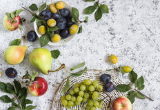 Assortment of fresh summer fruit - grapes, pears, apples, plums on a light background, top view. Stock Photos