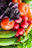 Assortment of fresh vegetables. And grass Royalty Free Stock Photography