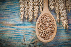 Assortment of golden wheat rye ears grains wooden spoon on wood Royalty Free Stock Image