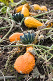 An assortment of gourds Stock Images