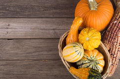 Assortment of Gourds and Squash Stock Image