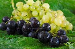Assortment of grapes on a wooden table Royalty Free Stock Photography