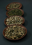 Assortment of green teas Royalty Free Stock Photos