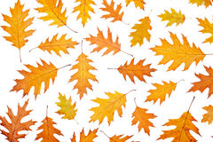 Assortment of leaves Royalty Free Stock Photo