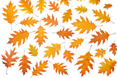 Assortment of leaves Stock Photo