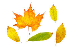 Assortment of leaves Royalty Free Stock Photography