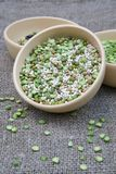 An assortment of legumes and cereals in a clay dish Stock Photos