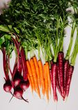 An assortment of loose raw beets and carrots. On white background Stock Photo