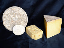 Assortment of mountain cheese Stock Image