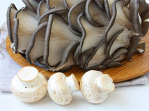 Assortment of mushrooms Royalty Free Stock Images