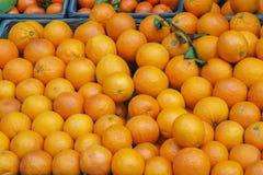 Assortment of orange fruits on market stall Stock Image
