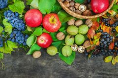 Assortment organic fruits berries apple grape damascene walnut rowanberry dark wooden country background health care. Natural concept top view Stock Images