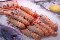 Assortment of prawns on ice at fish monger Stock Images