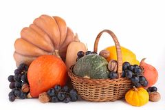Assortment of pumpkin Stock Image
