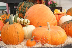 Assortment of Pumpkins, Gourds and Squash with Warts Stock Image