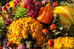 Assortment of pumpkins and other autumn vegetables Royalty Free Stock Images