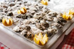 Raw oysters on ice garnished with lemon. An assortment of raw oysters on ice garnished with lemon Stock Image