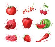Assortment of red foods, watercolor fruit and vegtables. Illustration vector illustration