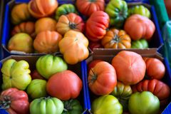 Assortment of red and green tomatoes on market. Organic fresh ve. Getarian meal Royalty Free Stock Image